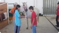 equitacao_2011_10