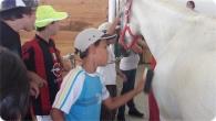 equitacao_2011_30