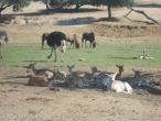 Badoca Safari Park :: badoca_7